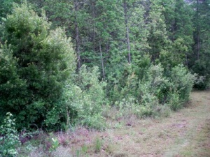 40 acres surrounded by state land  / 4 Cabins