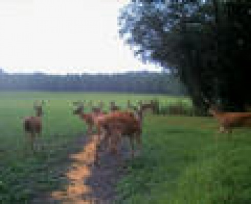 Guided, Garanteed Deer Hunts